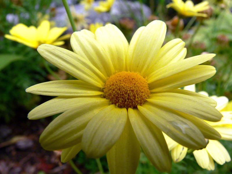 Muskoka Flowers